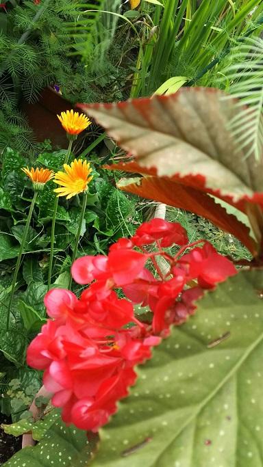 ミーママの実家の庭に咲く可憐なお花達1
