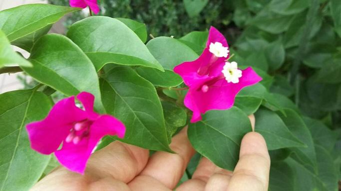 ミーママの実家の庭に咲く可憐なお花達4