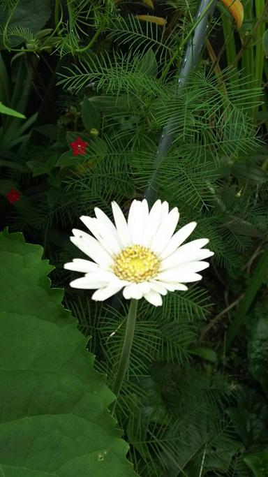 ミーママの実家の庭に咲く可憐なお花達6