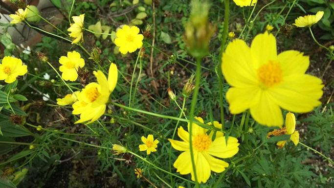 ミーママの実家の庭に咲く可憐なお花達7