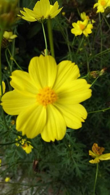 ミーママの実家の庭に咲く可憐なお花達8