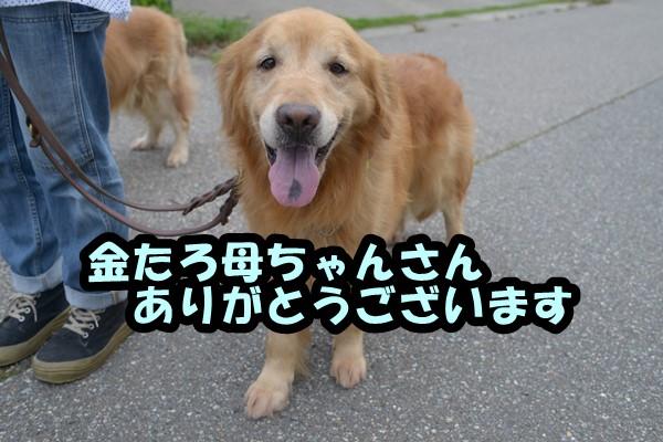 DSC_9609_201607062231009c0.jpg