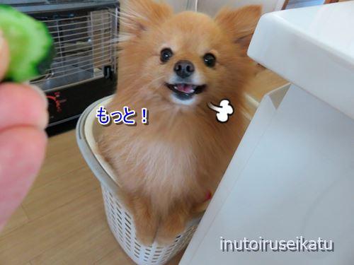 s-IMG_0344.jpg