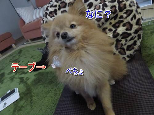 s-IMG_7831_1.jpg