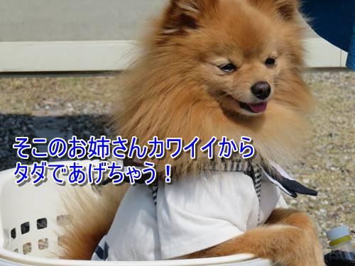 s-IMG_8040.jpg