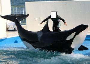 鴨シャチ2