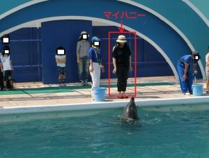 鴨イルカ2