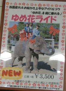 ゾウの国イベント編6
