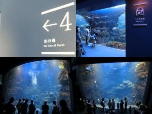 京都水族館9