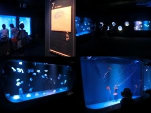 京都水族館15