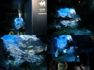京都水族館11