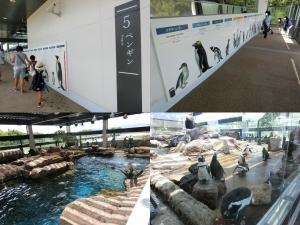 京都水族館12