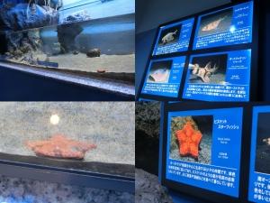 沼津深海7