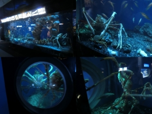 沼津深海9