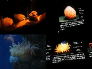 沼津深海11