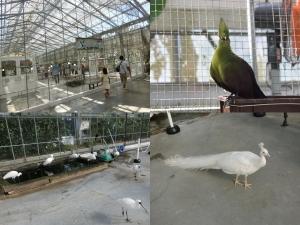 掛川鳥14