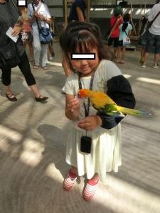 掛川鳥11