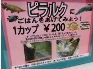 掛川鳥13