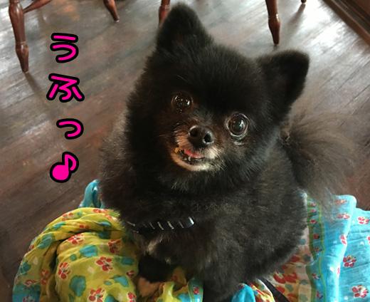majidekuituitarauchinoko.jpg