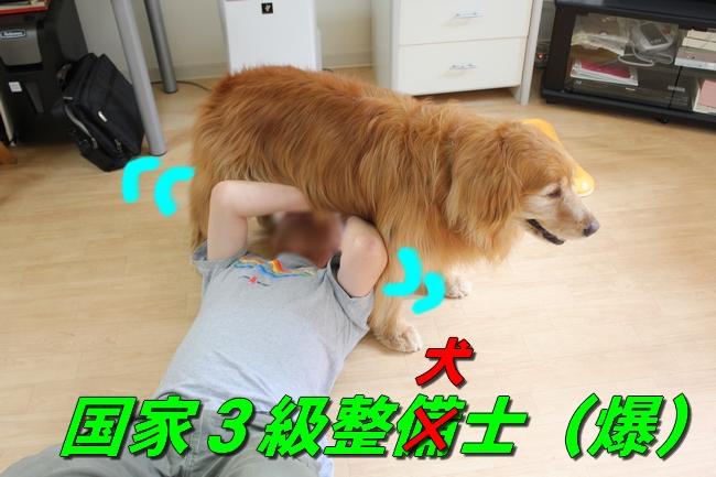 犬整備士 002
