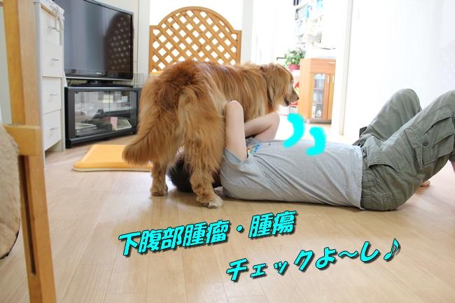 犬整備士 010