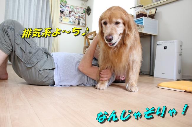 犬整備士 016
