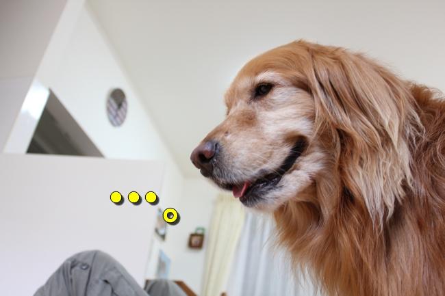 犬整備士 020
