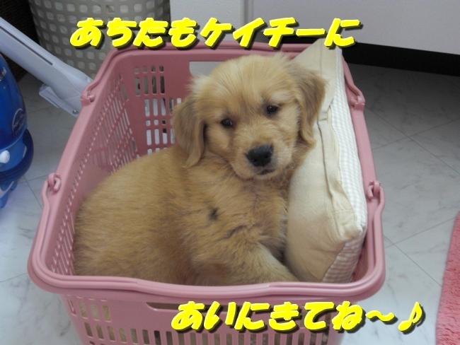 CIMG0346.jpg