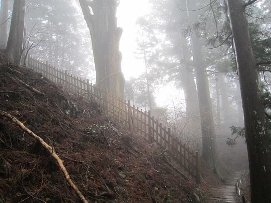 玉置神社 参道の杉