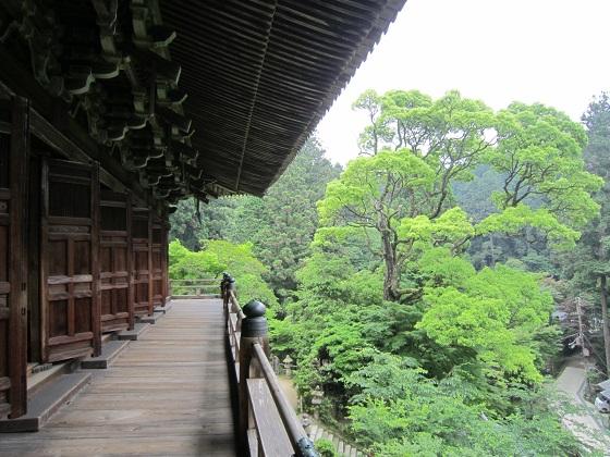 円教寺 摩尼殿新緑 2