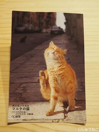 マルタの猫DM