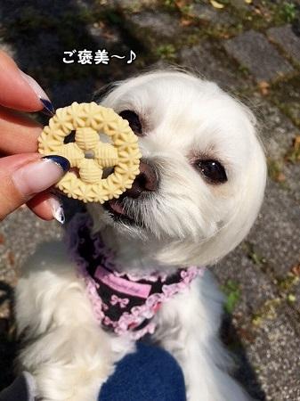 ご褒美クッキーイタダキマショ^^