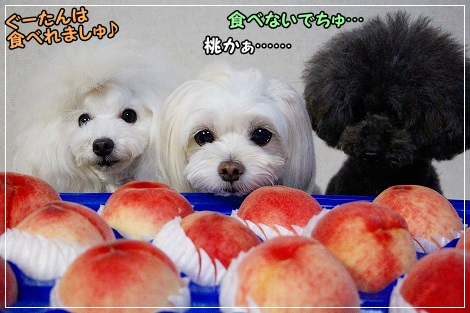 桃、食べないよね・・・すもナツは^^;