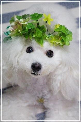 ぐーたんON花冠~