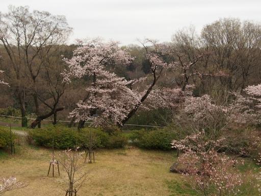 20160402・狭山湖3