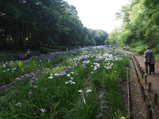 20160605・智光山公園1-01