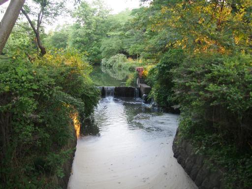 20160605・智光山公園3-12