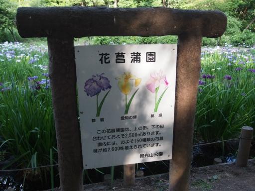 20160605・智光山公園植物02・大