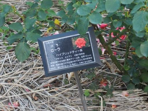 20160605・智光山公園植物14・中