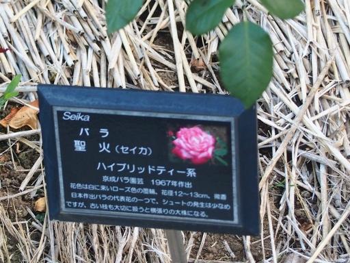 20160605・智光山公園植物22・中