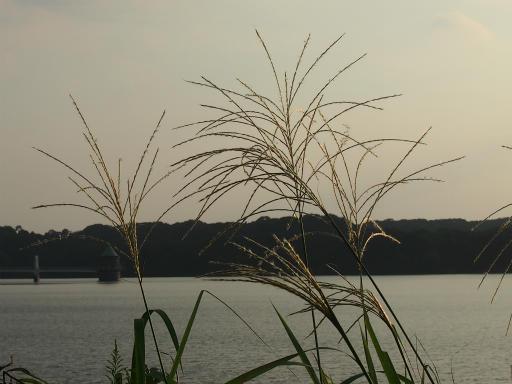 20161002・荒幡富士から狭山湖空2-13