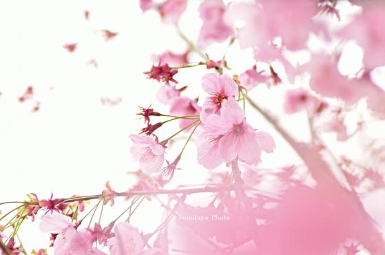 春はかなき