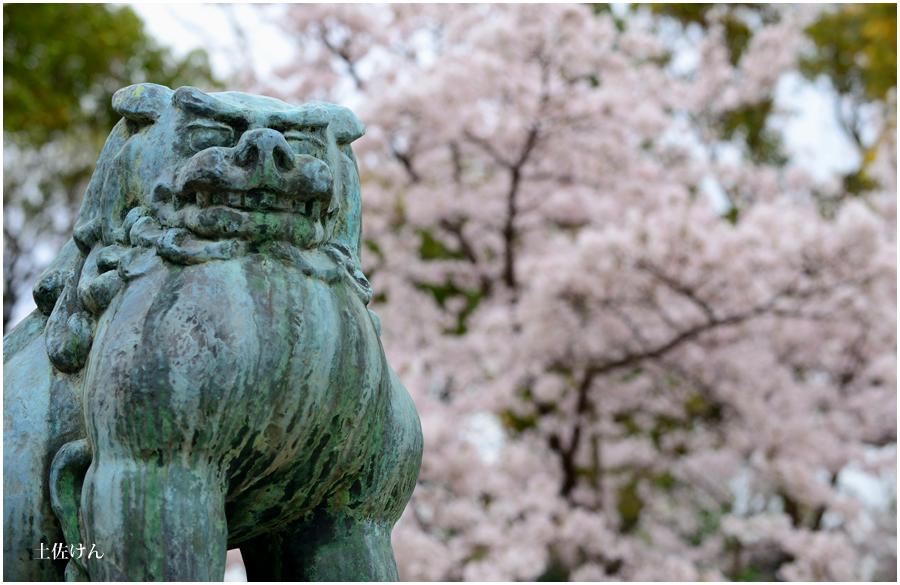 大阪城 桜4