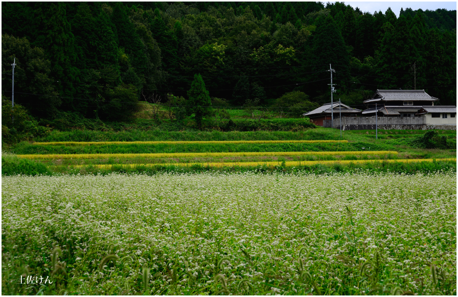 亀岡・蕎麦畑