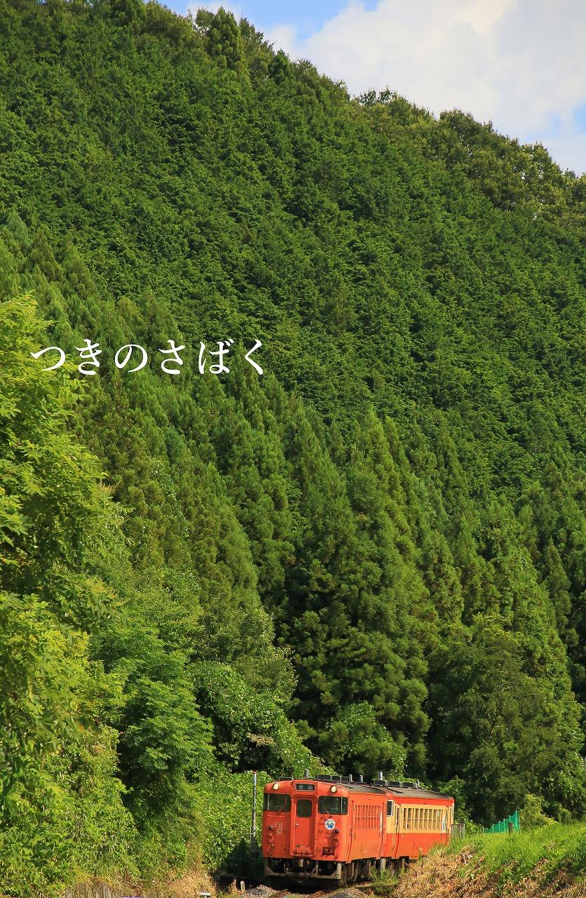 IMG_0049fauto_1.jpg