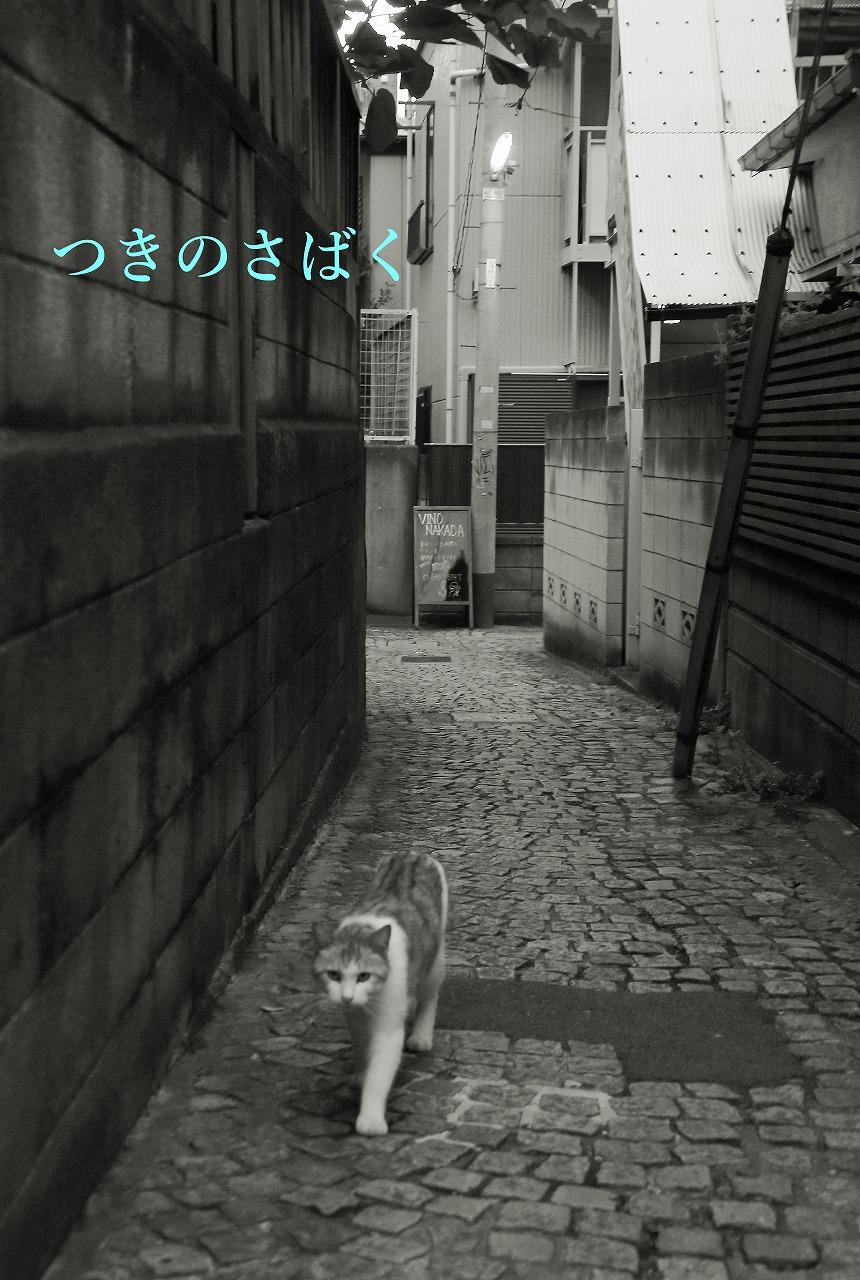 IMG_1197mono_1.jpg