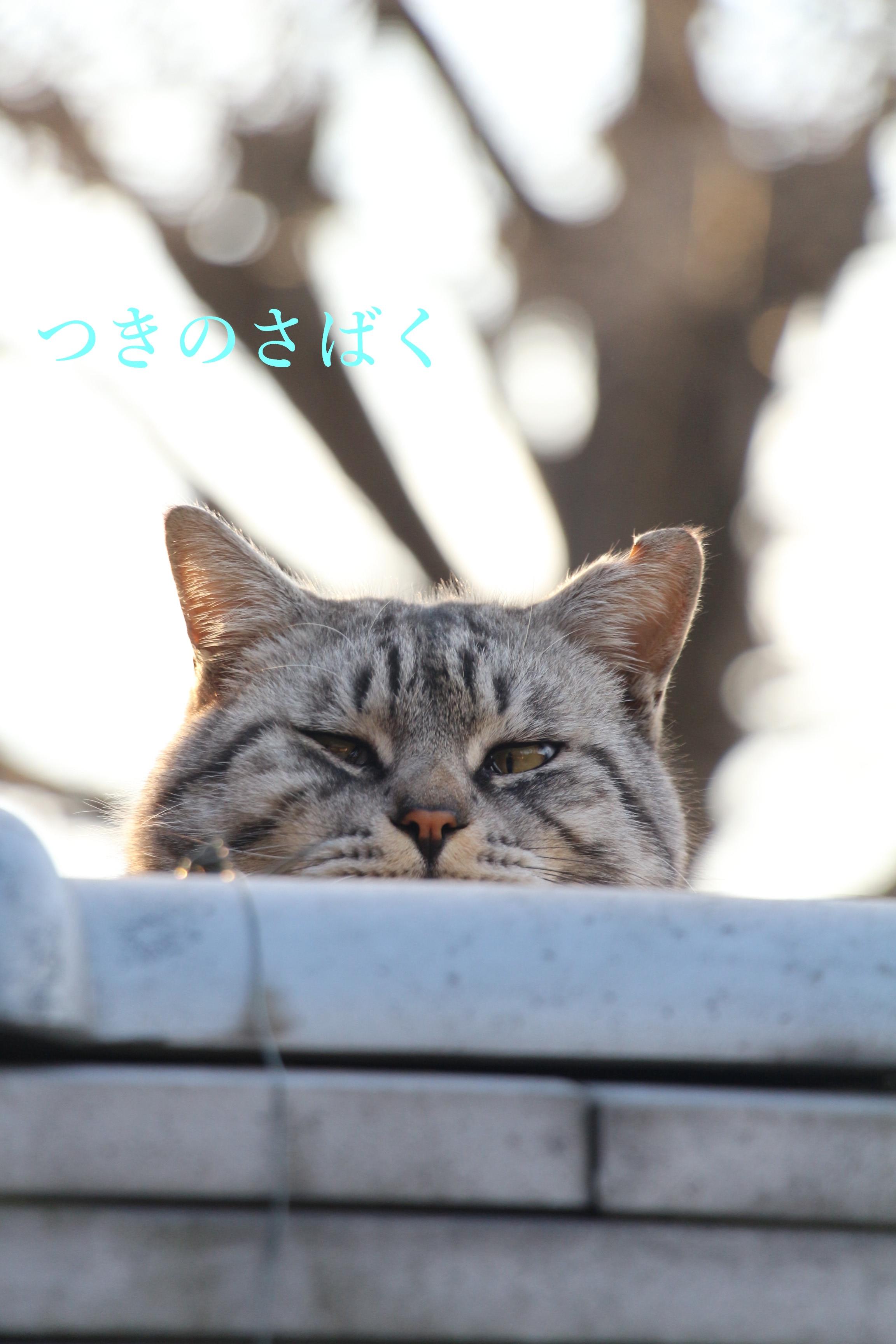 IMG_7046_1.jpg