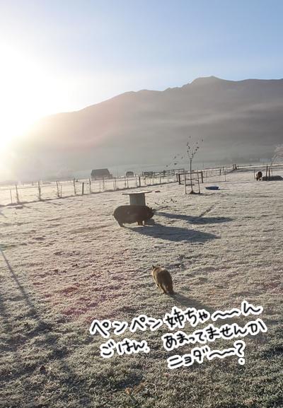 羊の国のビッグフット「マイナス10度のファーム・キャット」3