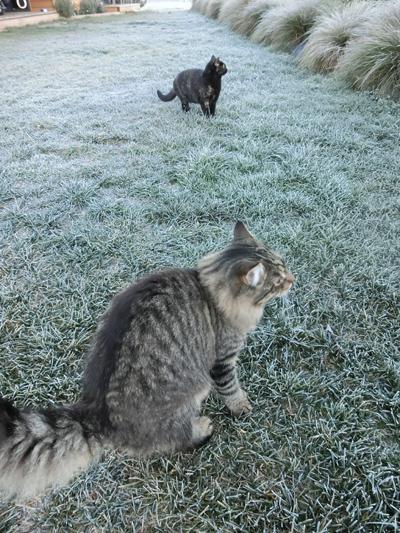 02062016_cat5.jpg
