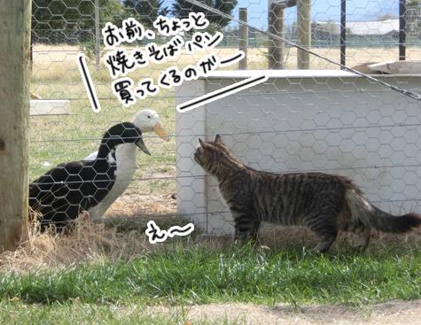 羊の国のビッグフット「ファーム猫検定」1